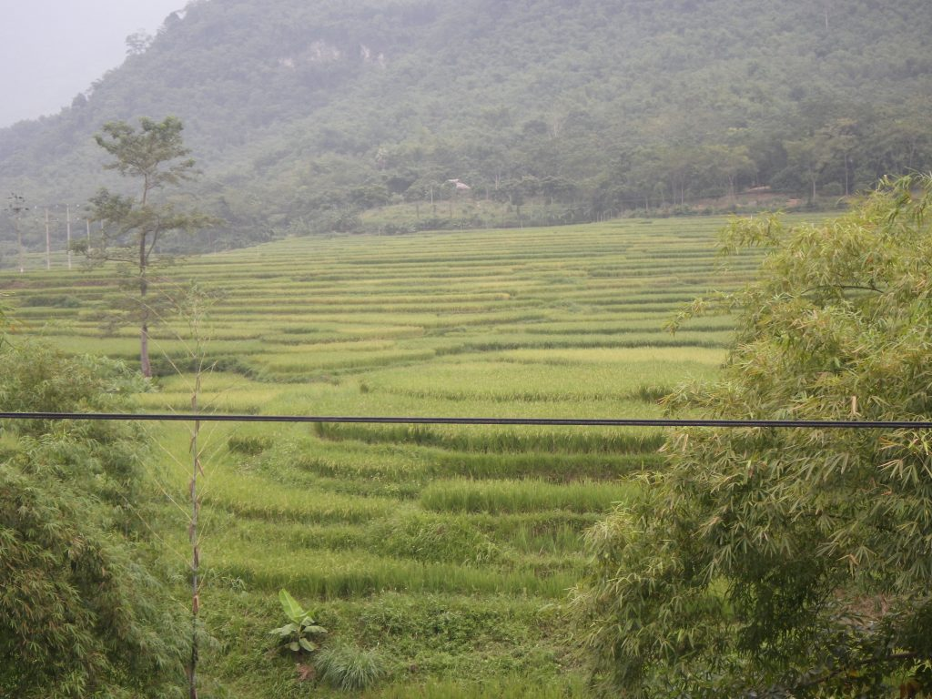 Rice cultivation Vietnam