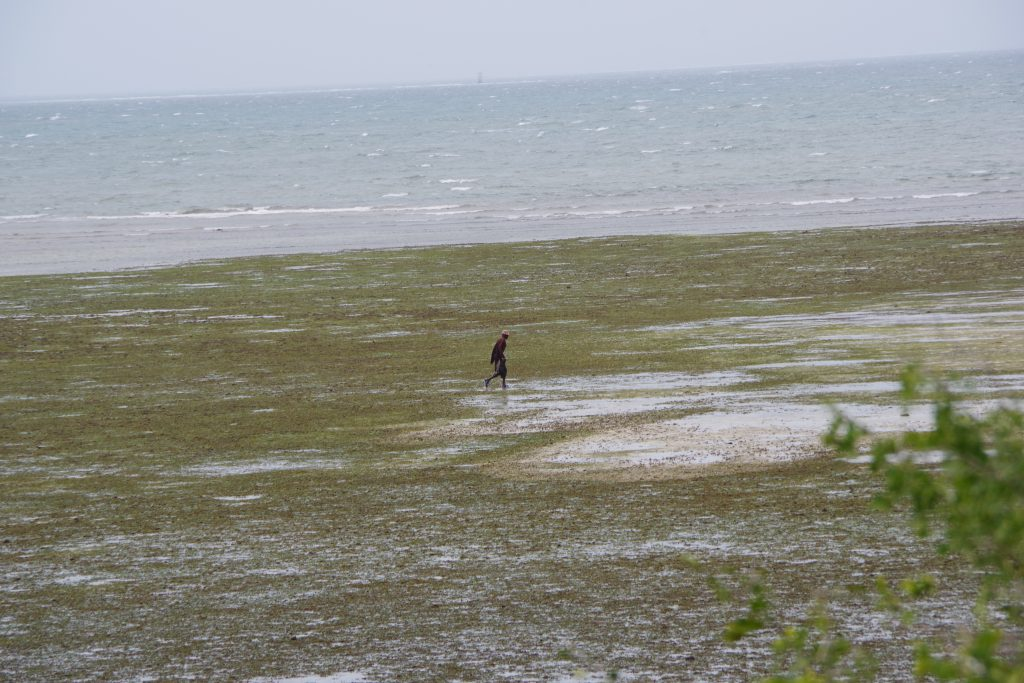 A gleaner collecting from the inter-tidal zone at Tanga