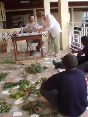 Botanical studies