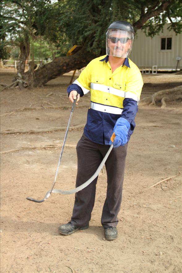 Andy venomous snake training